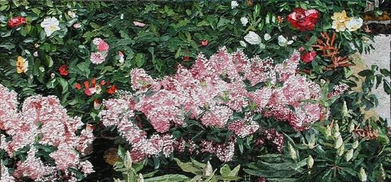 Fleurs, Skimmia Japonica, à la jardinerie de Poulainville. 2012. (74cmx35cm)