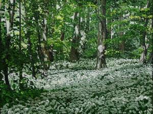 L`ail des ours en forêt d`Eu. 2011. 61cmx46cm.
