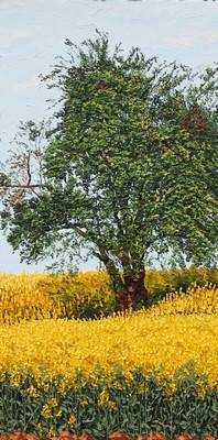 L`arbre et le colza. 2011. 80cmx40cm.